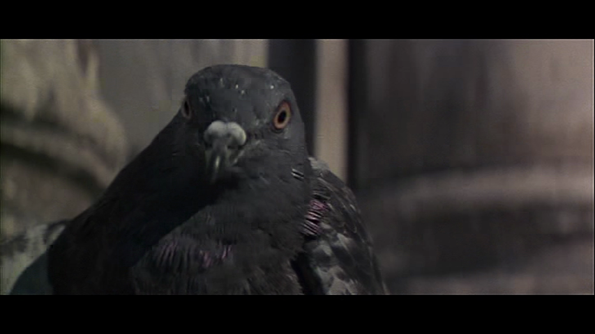 Moonraker-double-taking-pigeon